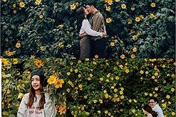Tháng 10 cận kề, nhường chỗ cho hoa dã quỳ phủ vàng khắp đất trời Tây Nguyên, check list top các cung đường ngắm hoa dã quỳ Đà Lạt đẹp nhất 2021 không thể bỏ lỡ
