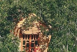 """Gia đình 10 người """"bỏ phố"""" lên Đà Lạt, trồng vườn hồng trĩu quả đẹp hơn cả Kyoto, Nhật Bản"""