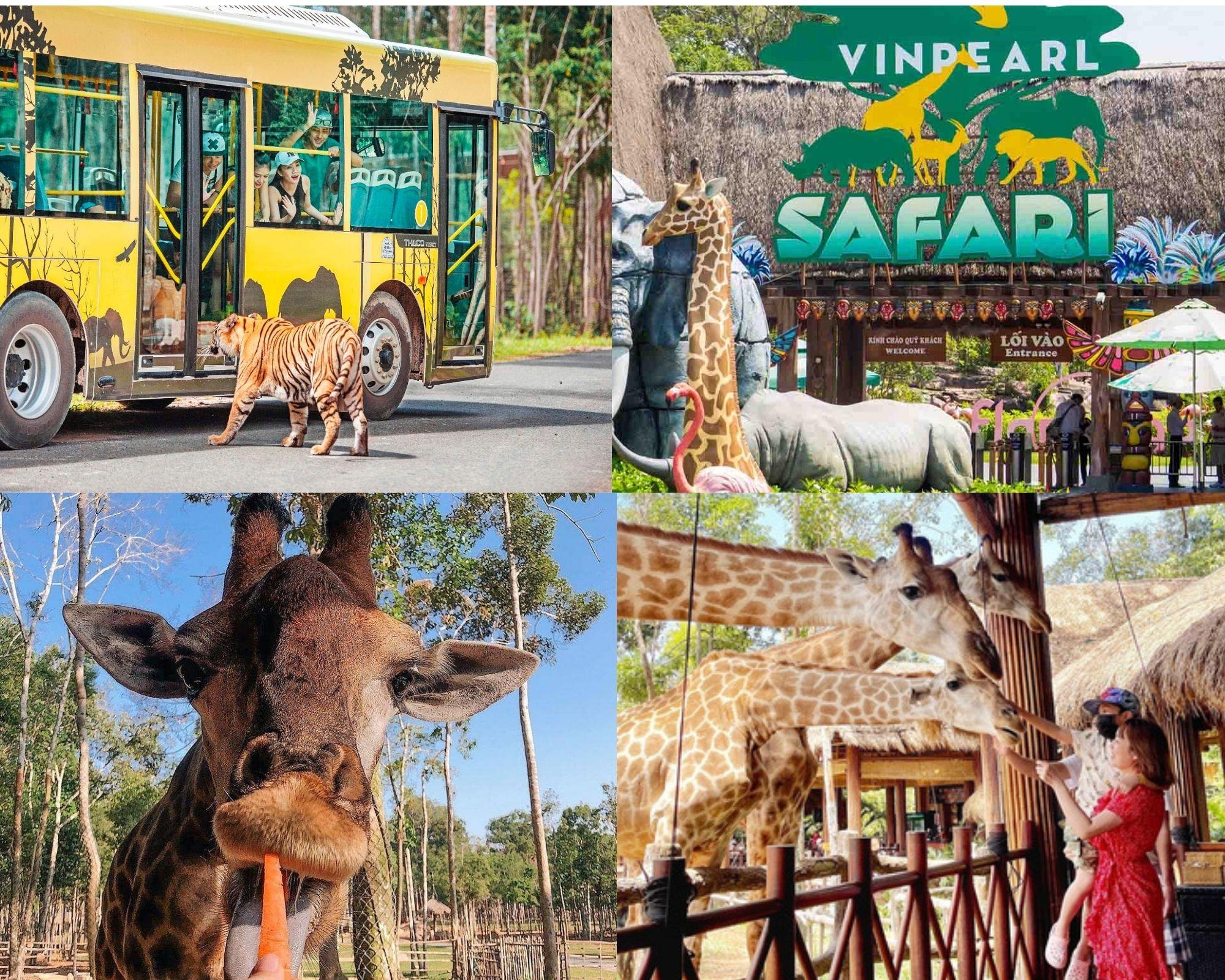 VinSafari lại là thế giới động vật muôn màu ở Vinpearl