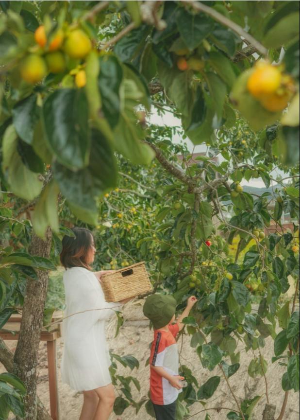 gia đình 10 người bỏ phố lên Đà Lạt trồng hồng