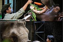 Dịch Covid-19 không có khách thăm quan nhưng 1.500 động vật ở Thảo Cầm Viên Sài Gòn vẫn được chăm sóc chu đáo nhờ sự hỗ trợ của cộng đồng
