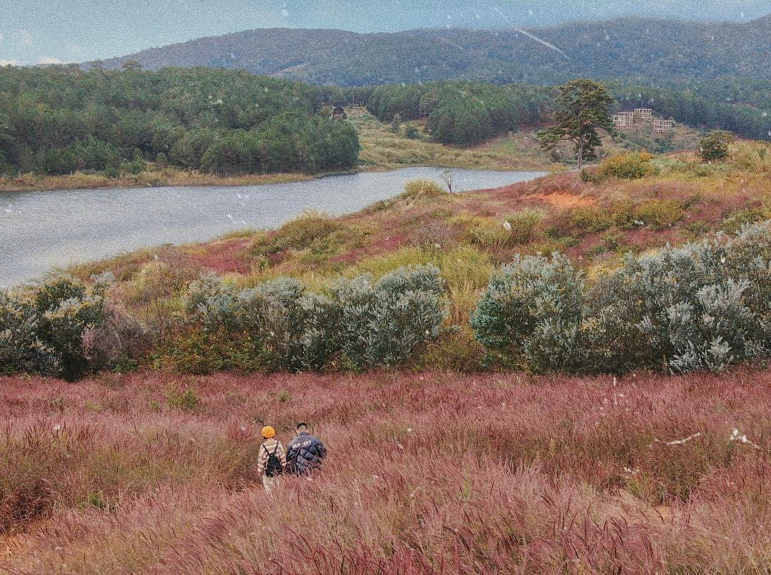 đồi cỏ chồn tại hồ Tuyền Lâm Đà Lạt