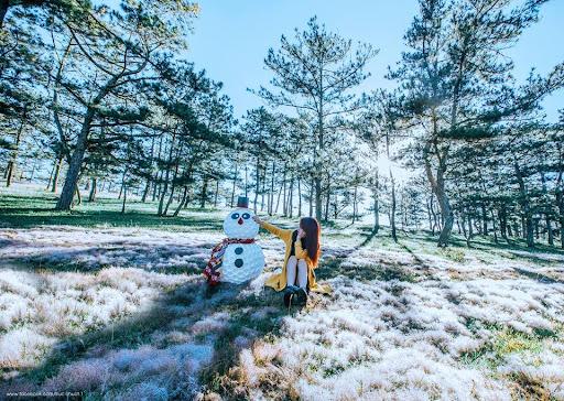 Cỏ tuyết cũng là một đặc sản ngày đông của Đà Lạt...
