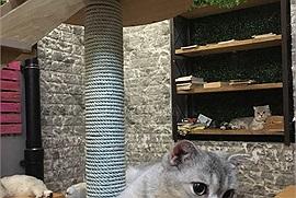 Danh sách quán cafe mèo khét tiếng rần rần hội yêu mèo nào cũng biết