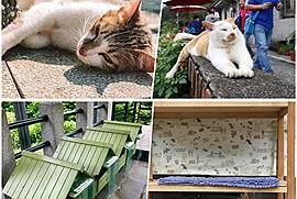 """Mèo có đang dần xâm chiếm thế giới: Nếu không tin bạn hãy đến ngôi làng đặc biệt chỉ có """"sen"""" và """"hoàng thượng"""" này"""
