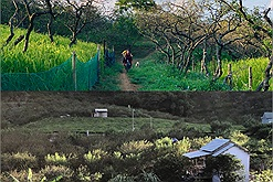 Mắc kẹt 3 tháng ở Mộc Châu vì dịch Covid-19, gia đình Hà Nội quyết định xây nhà sống giữa vườn mận