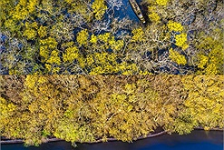Rừng ngập mặn Rú Chá mùa thay lá: những lớp chuyển màu ảo diệu như kiệt tác của thiên nhiên xứ Huế