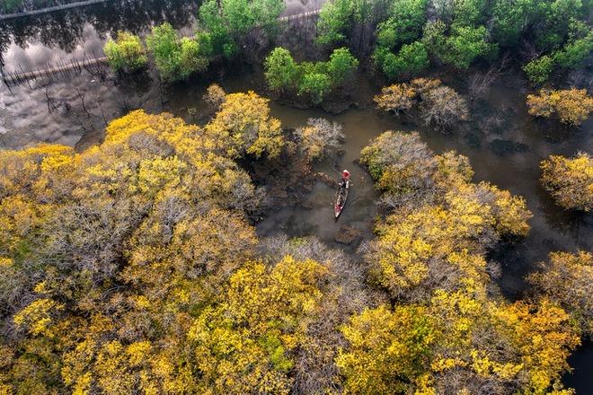 Rừng ngập mặn Rú Chá mùa thay lá đẹp mê mẩn