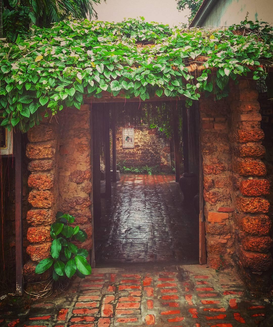 Ngôi nhà cổ của ông Nguyễn Văn Hùng với cổng xưa rợp bóng cây tơ hồng